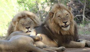 What You Should And Shouldn't Do On An African Safari