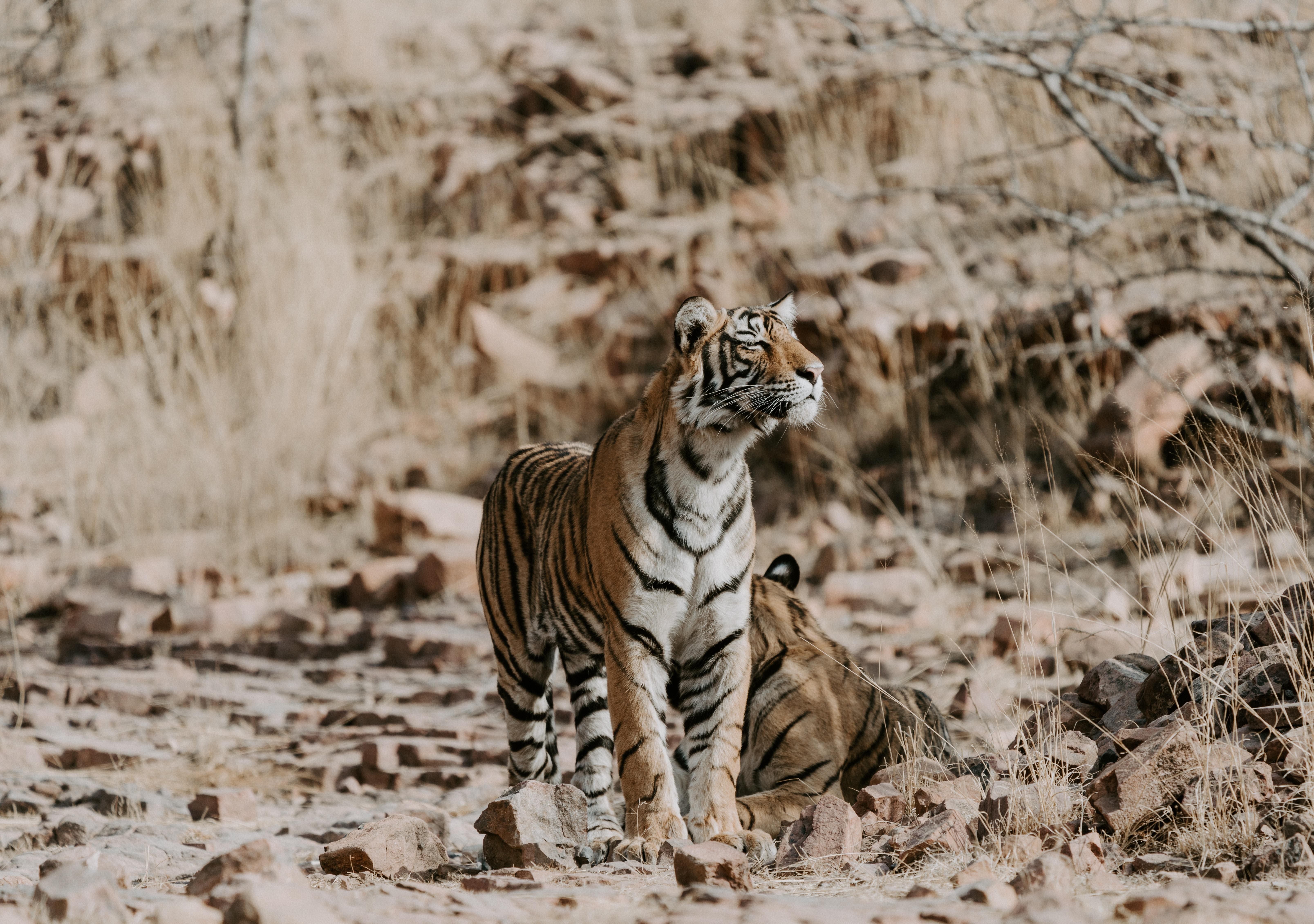 World Animal Day: Working to Keep Wildlife Wild!